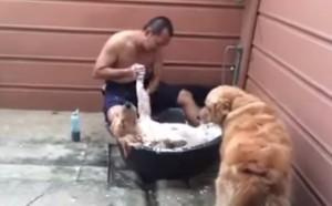 Bagno con massaggio, come alla spa. Ma per un cane VIDEO