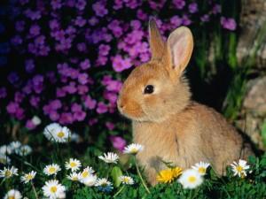 """Trento, animalisti contro la sagra del coniglio: """"Quei giochi sono vietati"""""""