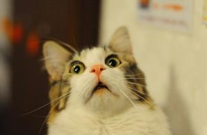 Incendia casa, poi corre nuda in strada col forchettone e decapita un gatto
