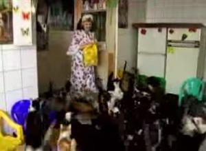 Nina Kostsovo, la signora che vive in un appartamento da due stanze con 137 gatti VIDEO