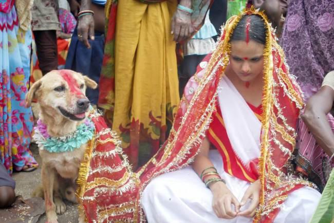 India, ragazza costretta a sposare un cane per cancellare una maledizione (foto)