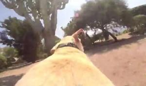 Il labrador corre felice verso il mare e si tuffa, la telecamera è sulla schiena