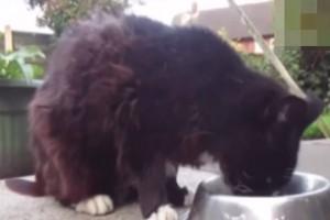Olivia, la gatta più anziana del mondo: ha 24 anni VIDEO