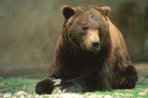 """Orso ucciso in Abruzzo. Antonio Centofanti confessa: """"sono stato io"""""""