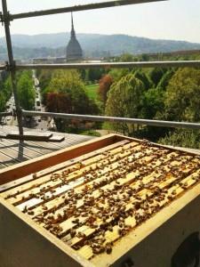 Urbees, alveari sui tetti delle case: produci miele e controlli l'ambiente