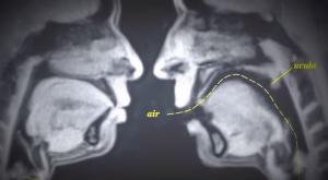 Cosa succede quando facciamo sesso? Video del 1960 realizzato con le risonanze magnetiche