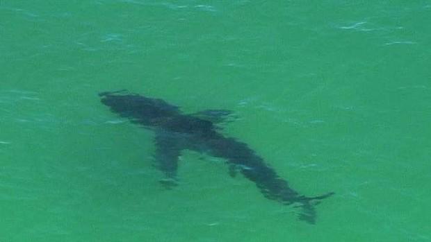 Australia, surfista muore attaccato da uno squalo