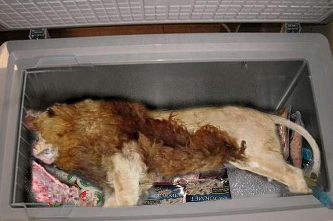 Leone morto nel freezer di un ristorante vicino lo zoo di Londra FOTO