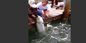 La macabra esca per attirare più pesci VIDEO
