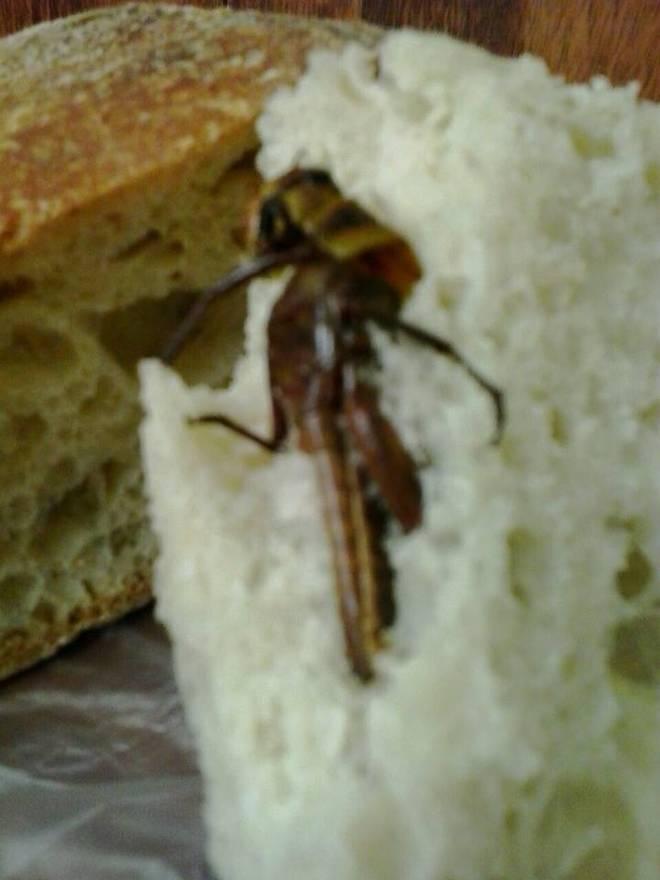 Napoli, compra il pane e dentro ci trova una cavalletta morta (foto)