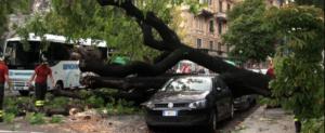 Genova, cade ippocastano a piazza Manin: auto lisciate, tragedia sfiorata