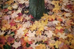 Meteo, autunno in arrivo: temperature risalgono, piogge solo al sud