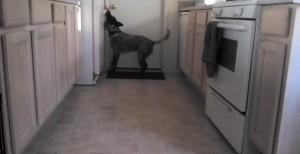 """""""I'm parched"""": l'uomo assetato ha voglia di birra, il suo cane la prende dal frigo VIDEO"""