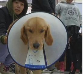 Cina, anche i cani hanno crisi respiratorie da inquinamento VIDEO