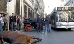Roma, cavallo botticella cade a terra vetturino in lacrime FOTO-VIDEO