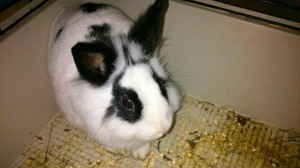Genova, molti conigli abbandonati. Allarme Enpa