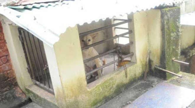 India, bimbo di 5 anni chiuso in una gabbia per cani: disturbava in classe FOTO