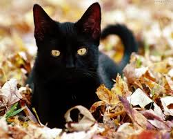 Halloween, gatti neri a rischio: meglio tenerli in casa