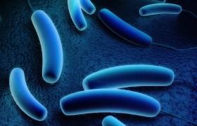 """Legionella a Bresso: 6 contagiati, 1 morto. """"No doccia, batterio viene da acqua"""""""