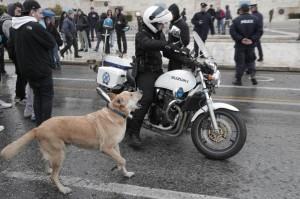 Grecia: Loukanikos, cane simbolo rivolta anti-austerity, è morto