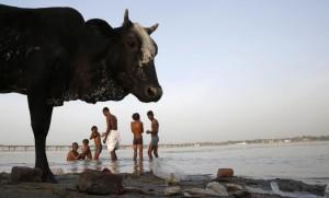 India: mangiava feci di mucca e beveva cherosene, costretta dal marito. E' morta