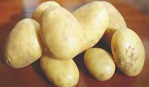 Bergamo, festa della patata: quella di Pradella ha 200 anni