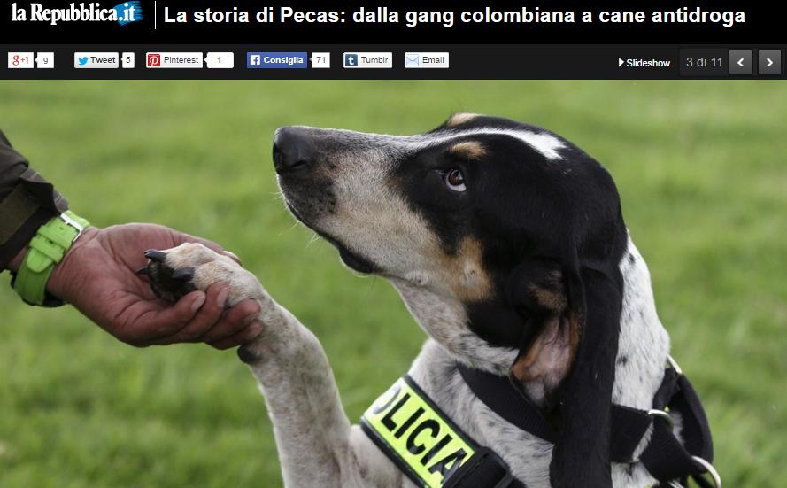 Pecas, il cane dei narcos è ora un poliziotto anti-droga
