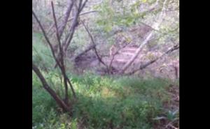 """Vaga nudo per 4 giorni nel bosco. Poi incontra cacciatore: """"Mi hanno derubato"""""""