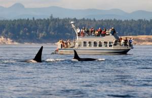 Il whale watching rompe le scatole alle balene