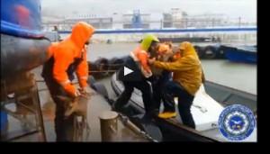 Alluvione Genova: il salvataggio di due caprioli finiti in mare VIDEO