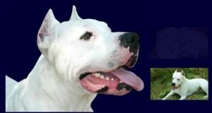 Albino Bagnoli chiede risarcimento per il cane morto. Ma Facebook lo inguaia