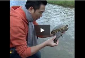 Cina, novecento rare tartarughe in pericolo rimesse in libertà VIDEO