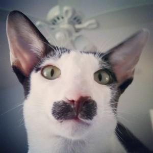 Stache, il gatto con una macchia a forma di baffoni: la foto fa il giro del web