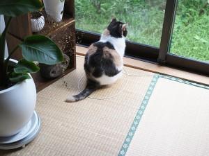 """Gatti nei cerchi, perché lo fanno: """"E' il loro spazio individuale"""" FOTO"""