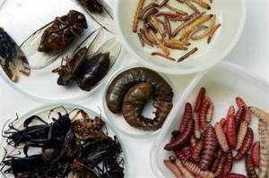 Menu con insetti: alla Sidreria di Milano sequestrati 50 kg di api, larve, vespe