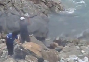 Perù, uccidono un leone marino a sassate. Ma un video li incastra