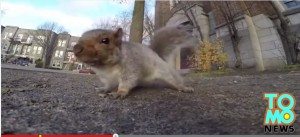 Montreal, scoiattolo ruba videocamera GoPro e la porta su un albero VIDEO