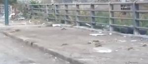 Napoli, decine di ratti corrono in strada