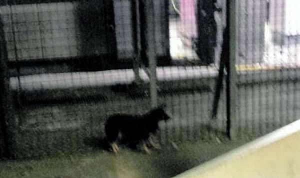 Fiumicino, cane fugge dalla stiva e blocca la pista dell'aeroporto