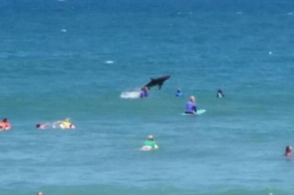 Squalo si tuffa tra i surfisti