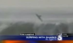 California, squalo emerge dal mare: surfista a pochi metri non se ne accorge