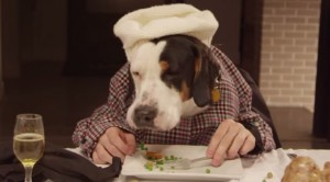 Video Youtube La Cena Di Natale Con Tredici Cani E Un Gatto Blitz