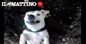 Caserta, ladri decapitano cane per rubare qualche attrezzo agricolo