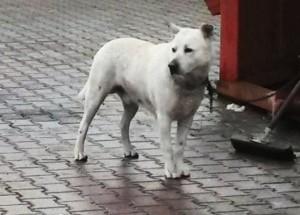 Roma, cane libero in strada morde bimbo al volto: denunciato padrone