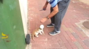 Gatto con testa incastrata nel barattolo