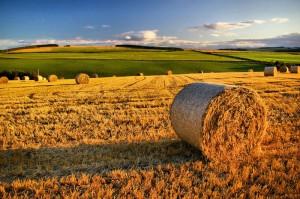 Imu terreni agricoli, governo e Tar non decidono: rischio stangata per proprietari