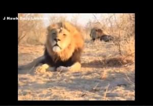 Il coro rock dei leoni del Botswana