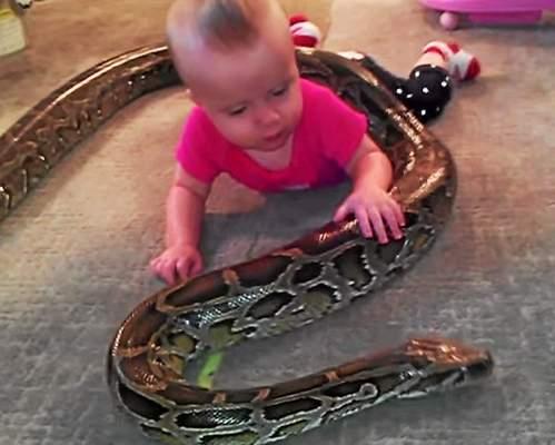 Usa, figlia piccola gioca con pitone lungo 4 metri FOTO: padre denunciato
