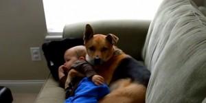 piccolo Carter è ammalato, cane sale sul divano e lo abbraccia