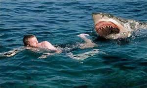 Squalo attacca nuotatore in Australia